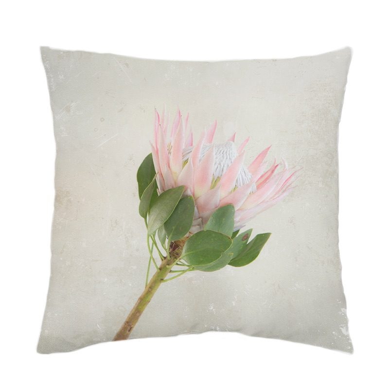 Pink King Protea on Grey