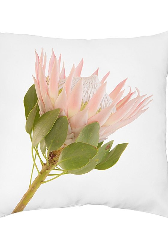 King protea scatter cushion
